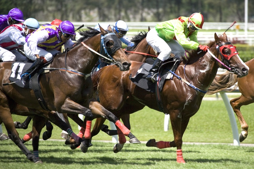 Horse Laying Systems - Horse Racing Tips